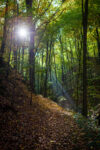 Wald bei Weesenstein