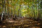 Wald bei Schlottwitz